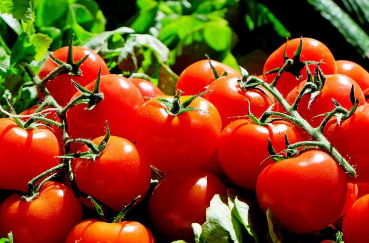 Как поливать томаты? Система капельного полива