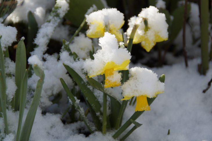 Лунный календарь садовода - Март