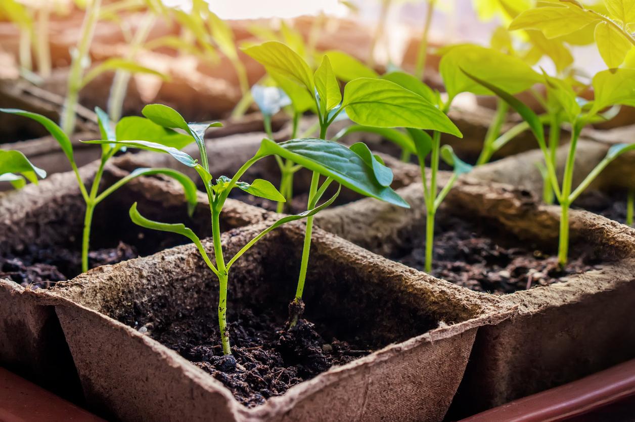 Когда и чем подкормить рассаду? Синтетические минеральные и органические удобрения