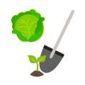 Благоприятное время для посева или посадки листовых овощей