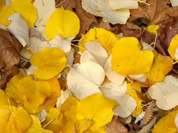 Лунный календарь садовода - Ноябрь