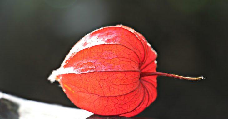 Лунный календарь садовода - Сентябрь