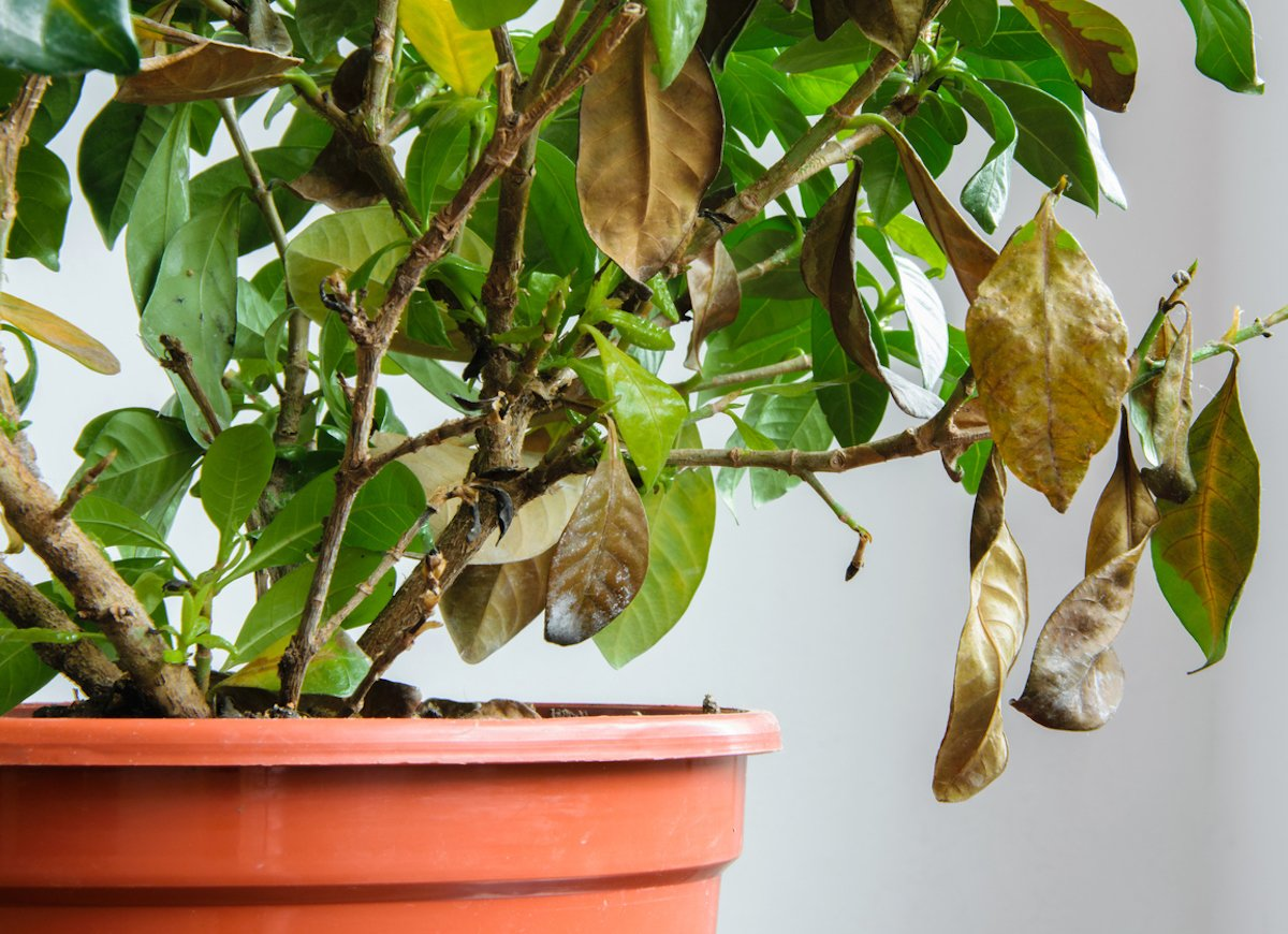 Признаки того, что растения нуждаются в удобрениях